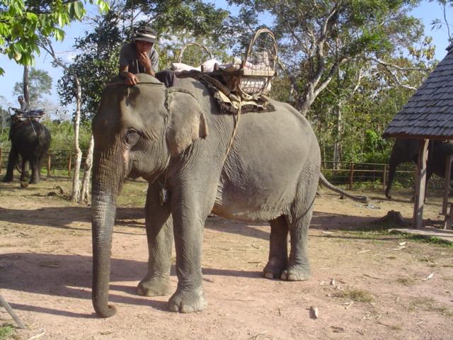 2006 Laos Ban Kiet Ngong Elephant Center 11.jpg