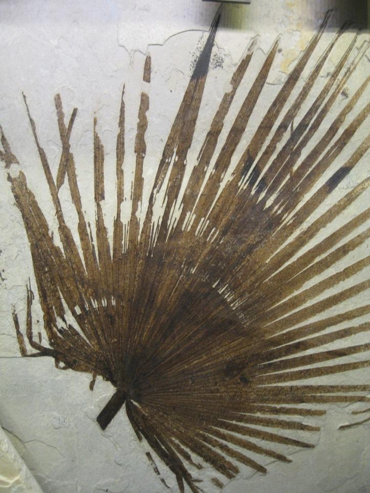 Fossil Butte fern