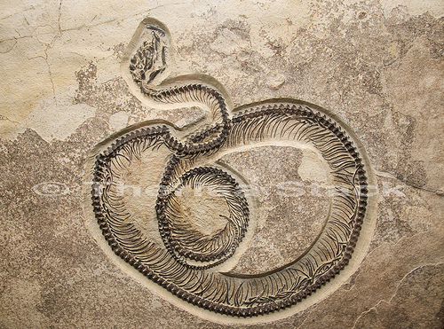 Fossil Butte snake