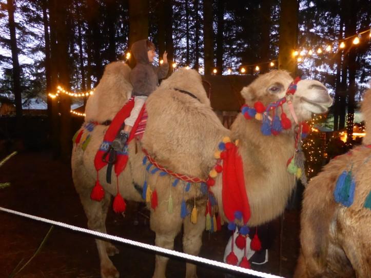 SG Kamele