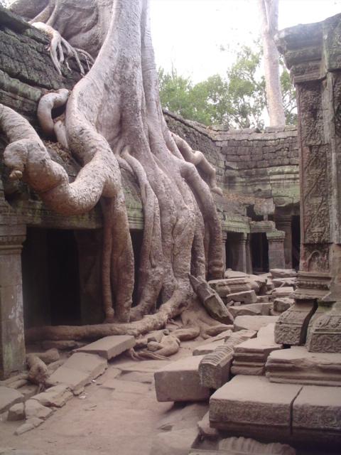 2007 Cambodia Angkor Wat Ta Prohm temple 43.jpg