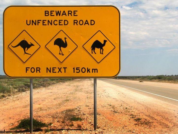 Aussie 1