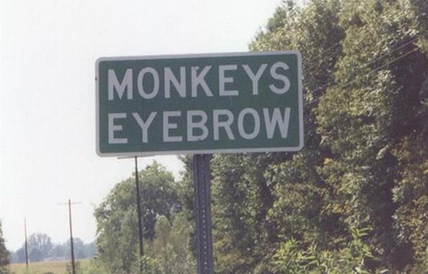 Monkeys Eyebrows KY